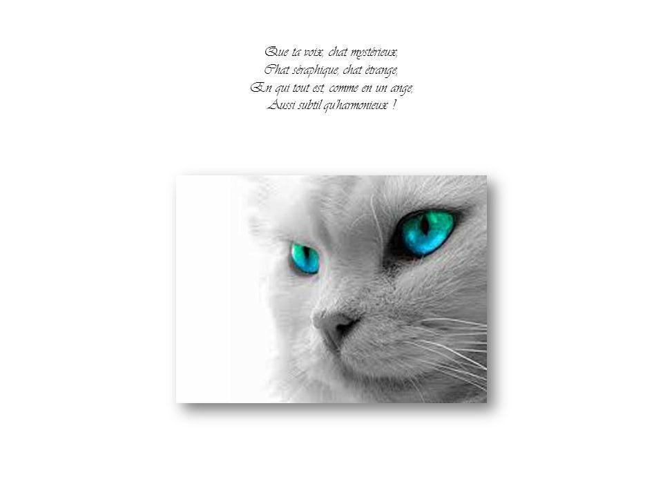 Que ta voix, chat mystérieux, Chat séraphique, chat étrange, En qui tout est, comme en un ange, Aussi subtil qu harmonieux !