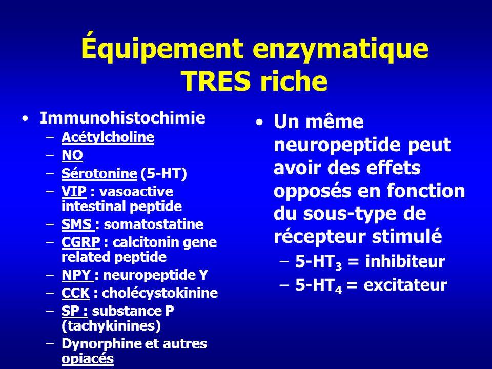 Équipement enzymatique TRES riche Immunohistochimie –Acétylcholine –NO –Sérotonine (5-HT) –VIP : vasoactive intestinal peptide –SMS : somatostatine –C
