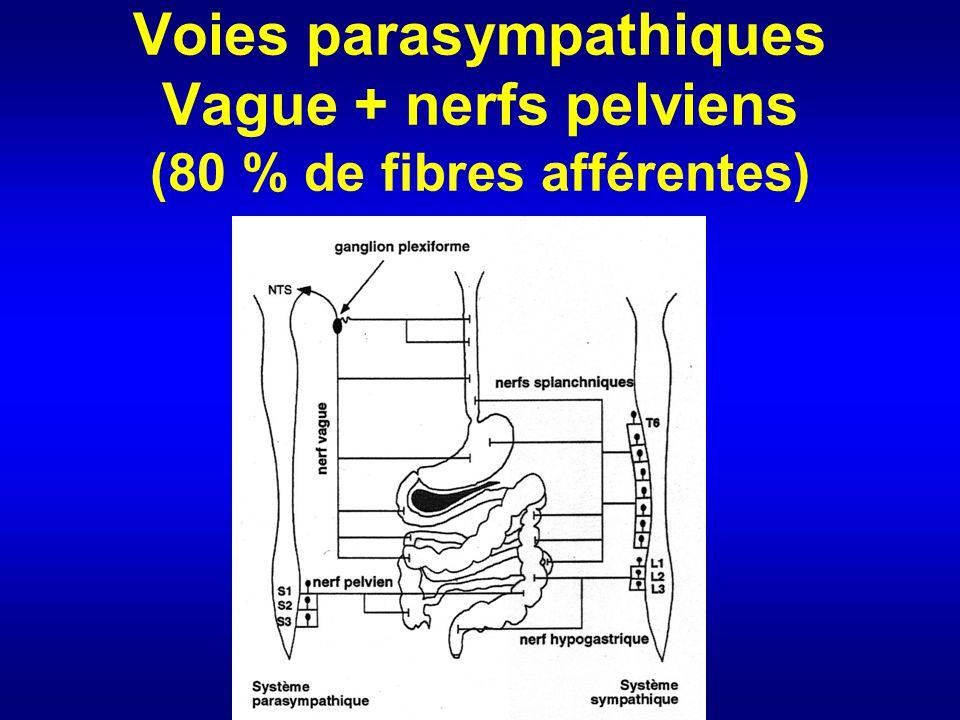 Voies parasympathiques Vague + nerfs pelviens (80 % de fibres afférentes)