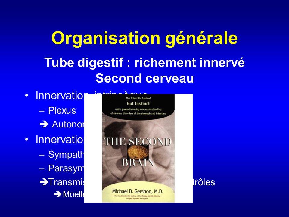 Organisation générale Innervation intrinsèque –Plexus Autonomie du tube digestif Innervation extrinsèque –Sympathique –Parasympathique Transmission ve