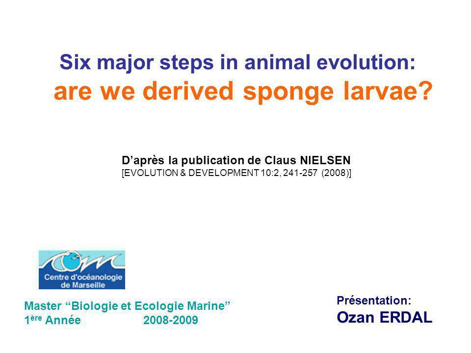 Six major steps in animal evolution: are we derived sponge larvae? Daprès la publication de Claus NIELSEN [EVOLUTION & DEVELOPMENT 10:2, 241-257 (2008