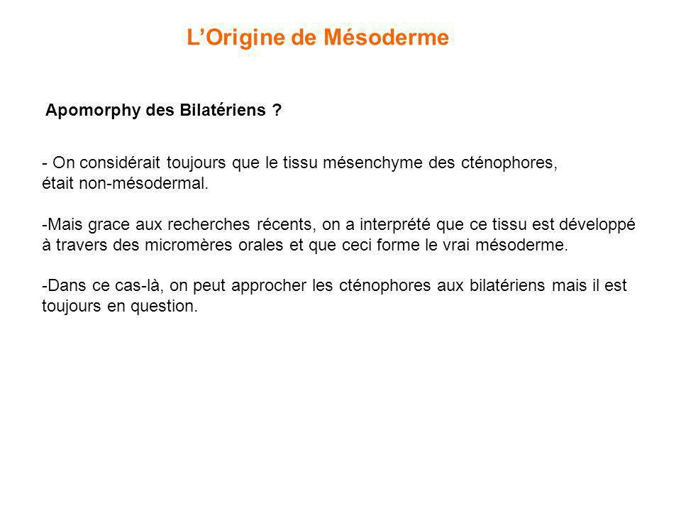 LOrigine de Mésoderme Apomorphy des Bilatériens ? - On considérait toujours que le tissu mésenchyme des cténophores, était non-mésodermal. -Mais grace