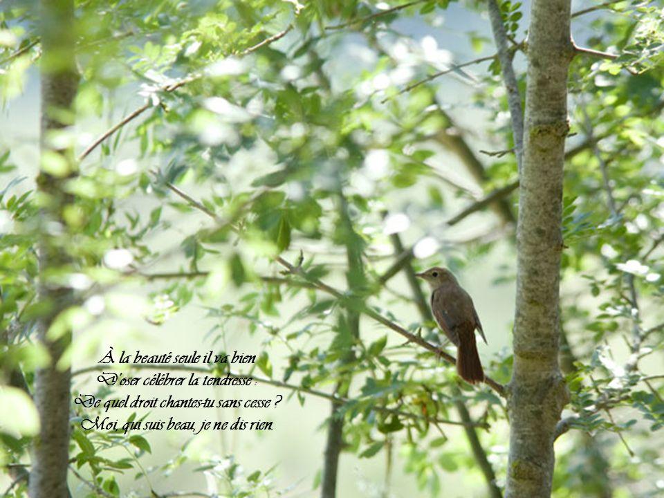 C'est bien à toi, chantre ennuyeux, Avec un si triste plumage, Et ce long bec, et ces gros yeux, De vouloir charmer ce bocage !