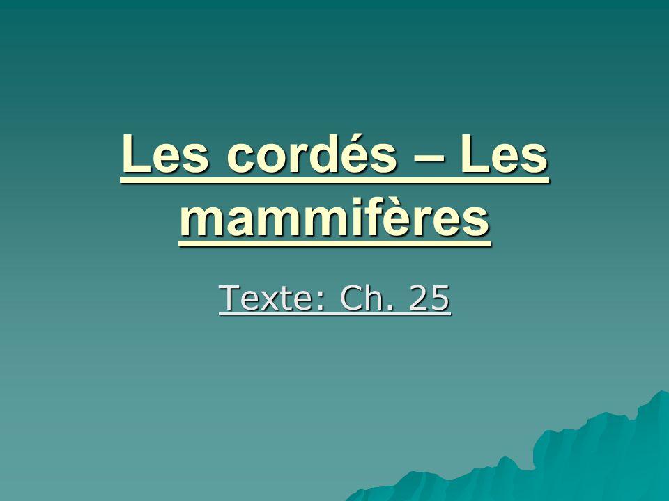 Les cordés – Les mammifères Texte: Ch. 25