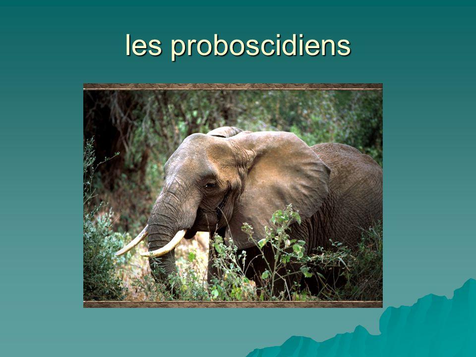 les proboscidiens