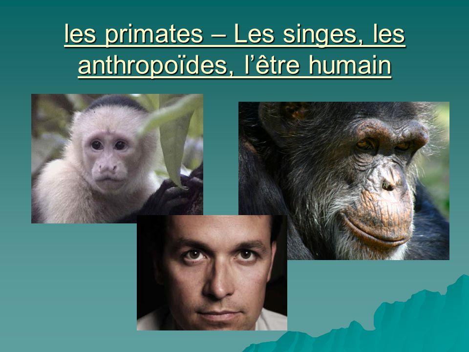 les primates – Les singes, les anthropoïdes, lêtre humain