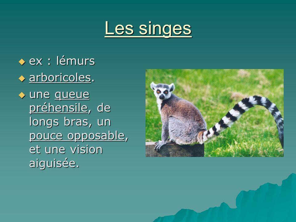 Les singes ex : lémurs ex : lémurs arboricoles. arboricoles. une queue préhensile, de longs bras, un pouce opposable, et une vision aiguisée. une queu