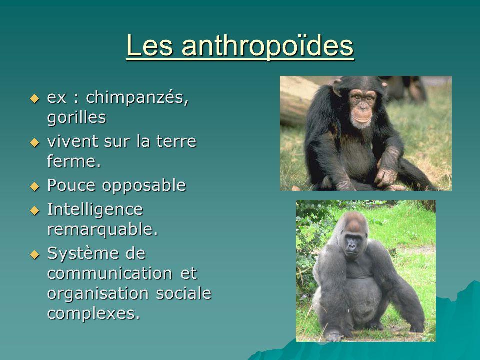 Les anthropoïdes ex : chimpanzés, gorilles ex : chimpanzés, gorilles vivent sur la terre ferme. vivent sur la terre ferme. Pouce opposable Pouce oppos