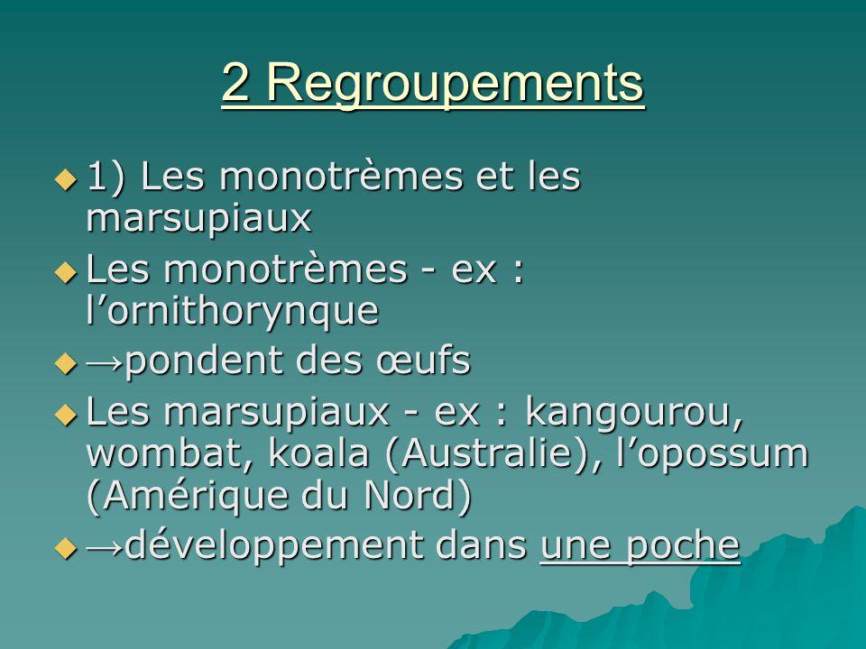 2 Regroupements 1) Les monotrèmes et les marsupiaux 1) Les monotrèmes et les marsupiaux Les monotrèmes - ex : lornithorynque Les monotrèmes - ex : lor