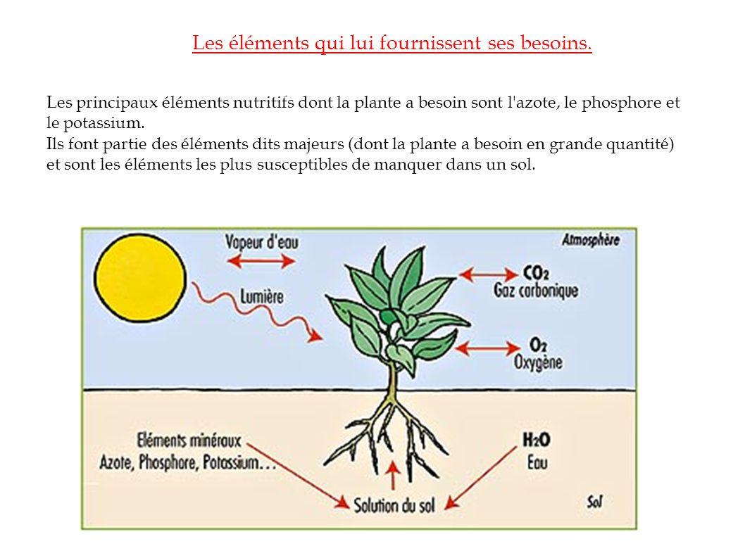 Les éléments qui lui fournissent ses besoins. Les principaux éléments nutritifs dont la plante a besoin sont l'azote, le phosphore et le potassium. Il