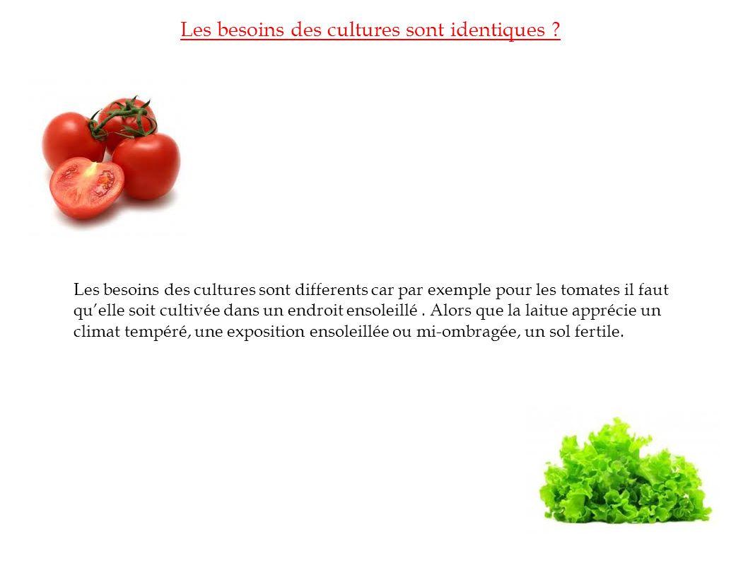Les besoins des cultures sont identiques ? Les besoins des cultures sont differents car par exemple pour les tomates il faut quelle soit cultivée dans