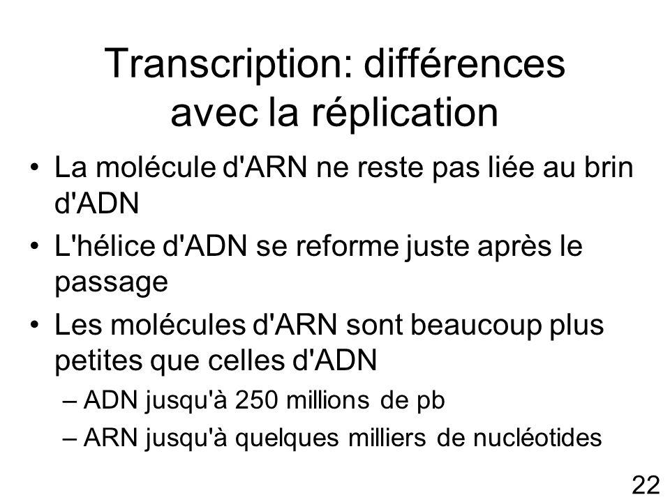 22 Transcription: différences avec la réplication La molécule d ARN ne reste pas liée au brin d ADN L hélice d ADN se reforme juste après le passage Les molécules d ARN sont beaucoup plus petites que celles d ADN –ADN jusqu à 250 millions de pb –ARN jusqu à quelques milliers de nucléotides