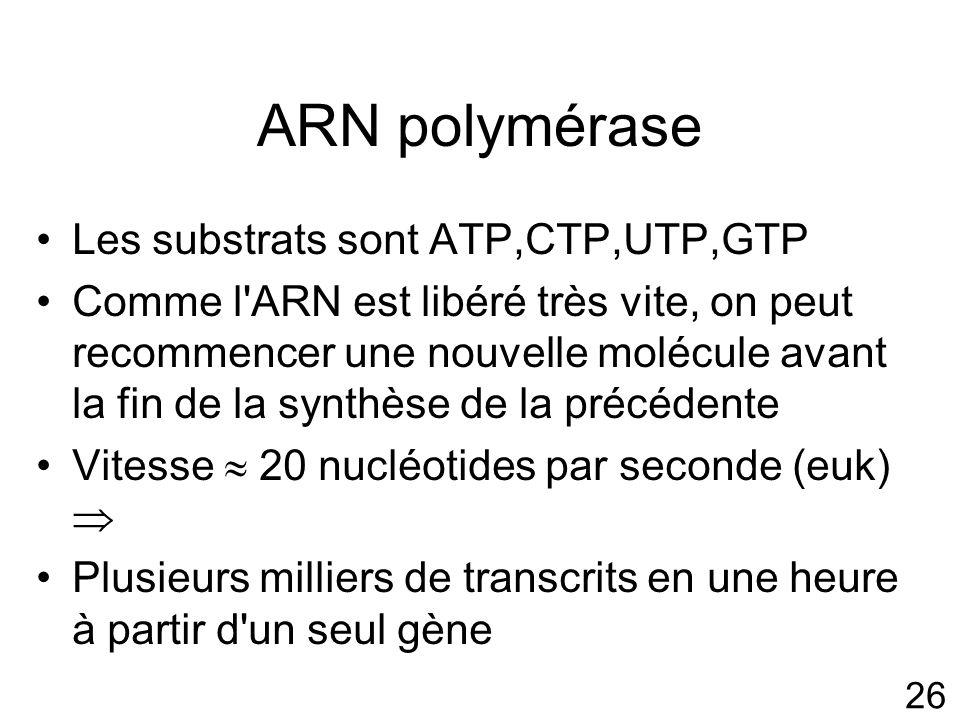 26 ARN polymérase Les substrats sont ATP,CTP,UTP,GTP Comme l ARN est libéré très vite, on peut recommencer une nouvelle molécule avant la fin de la synthèse de la précédente Vitesse 20 nucléotides par seconde (euk) Plusieurs milliers de transcrits en une heure à partir d un seul gène