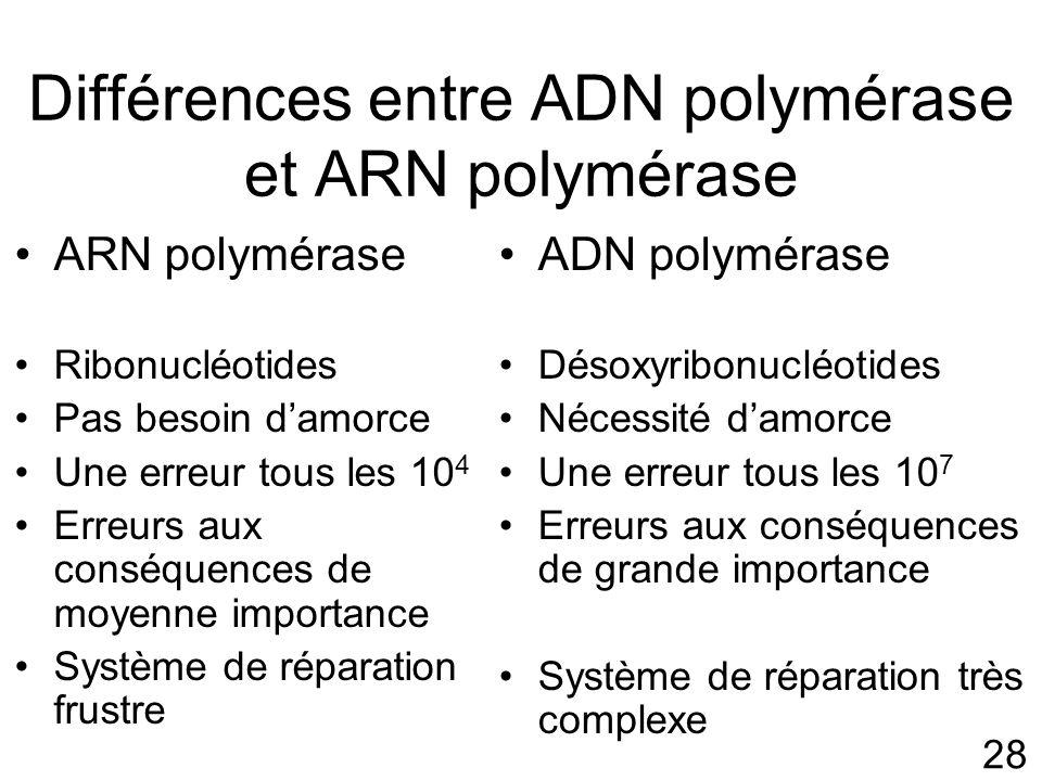 28 Différences entre ADN polymérase et ARN polymérase ARN polymérase Ribonucléotides Pas besoin damorce Une erreur tous les 10 4 Erreurs aux conséquences de moyenne importance Système de réparation frustre ADN polymérase Désoxyribonucléotides Nécessité damorce Une erreur tous les 10 7 Erreurs aux conséquences de grande importance Système de réparation très complexe