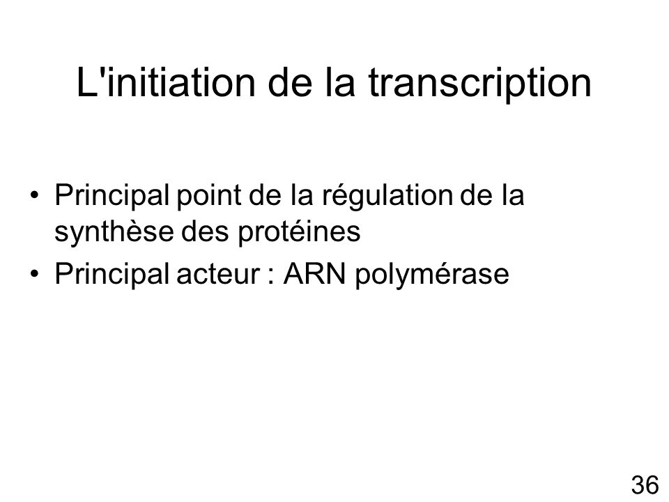36 L'initiation de la transcription Principal point de la régulation de la synthèse des protéines Principal acteur : ARN polymérase