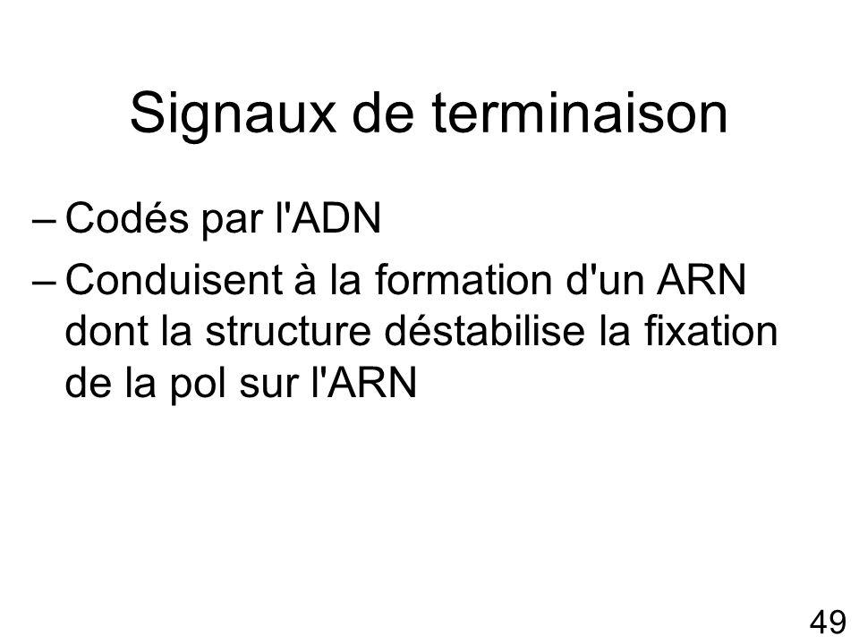 49 Signaux de terminaison –Codés par l ADN –Conduisent à la formation d un ARN dont la structure déstabilise la fixation de la pol sur l ARN