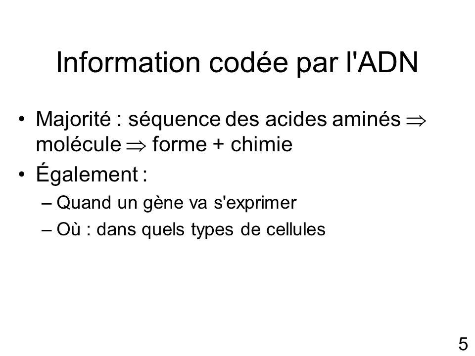 5 Information codée par l ADN Majorité : séquence des acides aminés molécule forme + chimie Également : –Quand un gène va s exprimer –Où : dans quels types de cellules
