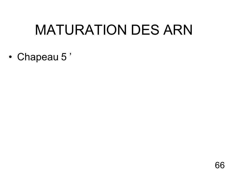 66 MATURATION DES ARN Chapeau 5
