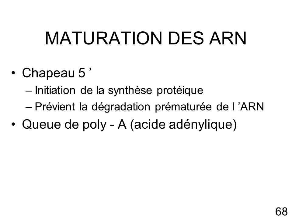 68 MATURATION DES ARN Chapeau 5 –Initiation de la synthèse protéique –Prévient la dégradation prématurée de l ARN Queue de poly - A (acide adénylique)