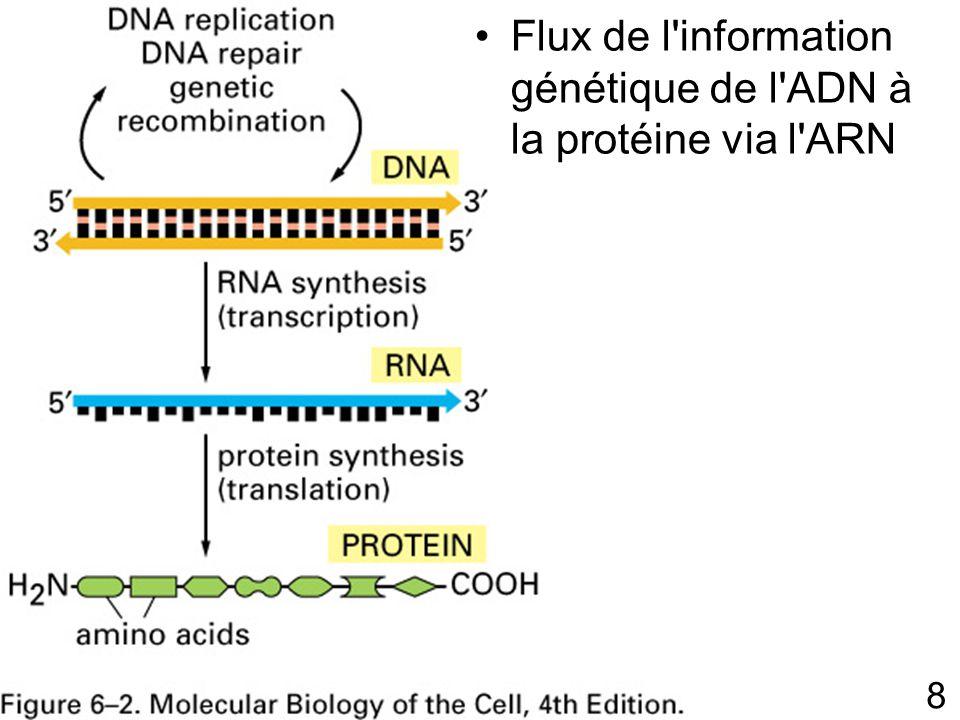 9 Dogme central de la biologie moléculaire Toutes les cellules de la bactérie à l homme expriment leur information génétique de cette façon