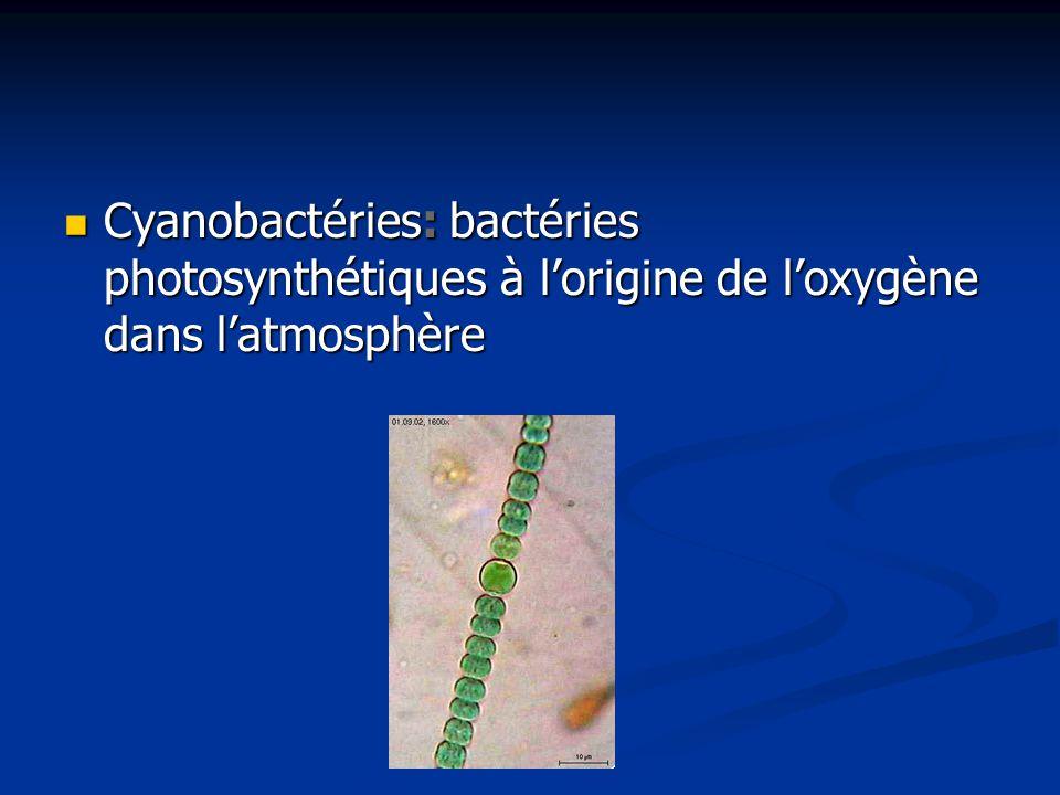 Cyanobactéries: bactéries photosynthétiques à lorigine de loxygène dans latmosphère Cyanobactéries: bactéries photosynthétiques à lorigine de loxygène