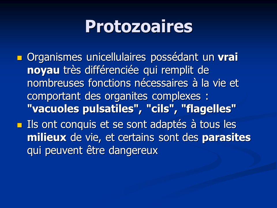 Protozoaires Organismes unicellulaires possédant un vrai noyau très différenciée qui remplit de nombreuses fonctions nécessaires à la vie et comportan