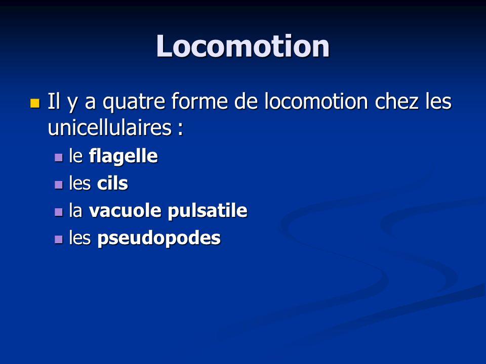 Locomotion Il y a quatre forme de locomotion chez les unicellulaires : Il y a quatre forme de locomotion chez les unicellulaires : le flagelle le flag