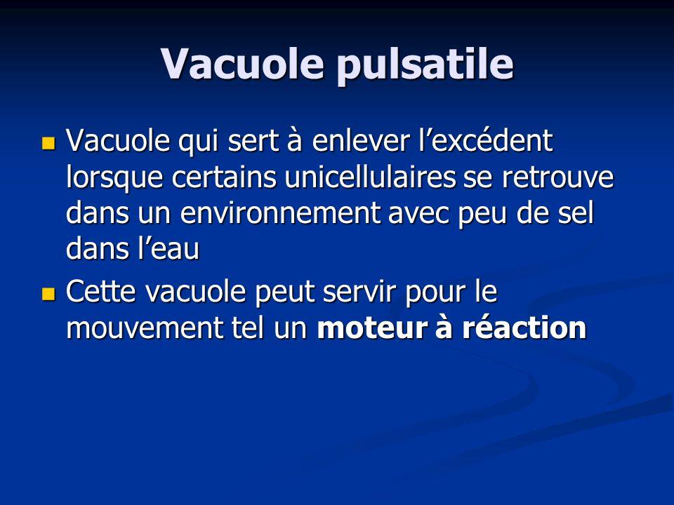 Vacuole pulsatile Vacuole qui sert à enlever lexcédent lorsque certains unicellulaires se retrouve dans un environnement avec peu de sel dans leau Vac