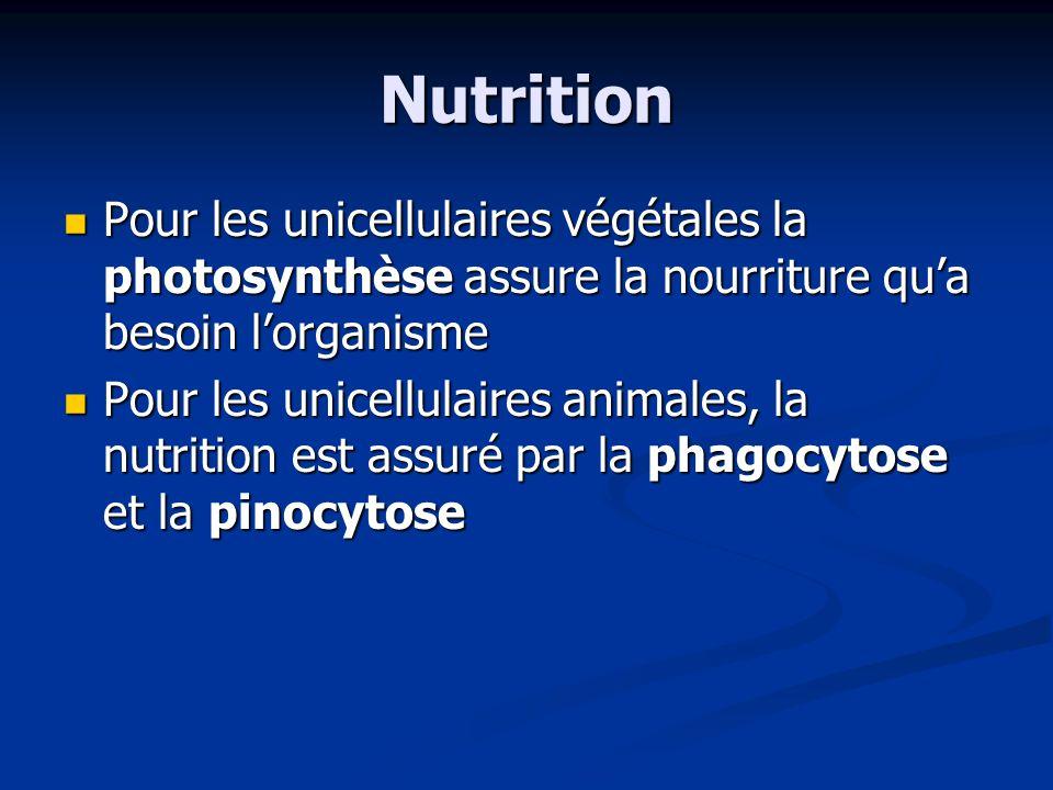 Nutrition Pour les unicellulaires végétales la photosynthèse assure la nourriture qua besoin lorganisme Pour les unicellulaires végétales la photosynt