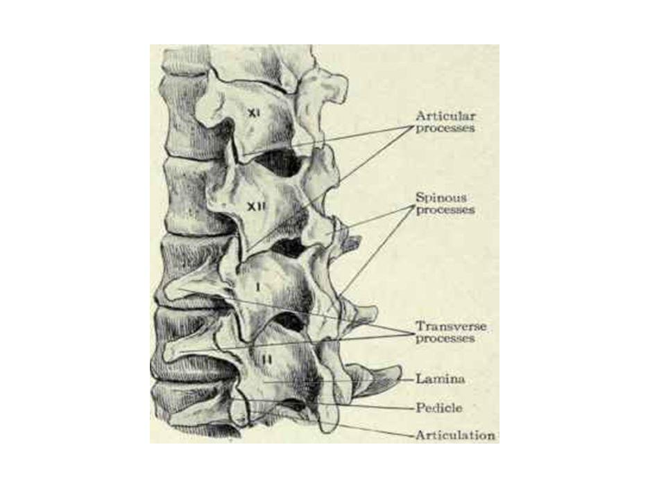 Cartilage Il existe différents types de cartilage: le cartilage hyalin (des surfaces articulaires), les fibrocartilages (ménisques, labrum ou disques intercalés entre deux élément osseux), et les cartilages élastiques (pavillon de loreille, ou partie de la cloison nasale).