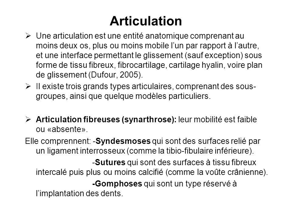 Articulation Une articulation est une entité anatomique comprenant au moins deux os, plus ou moins mobile lun par rapport à lautre, et une interface p