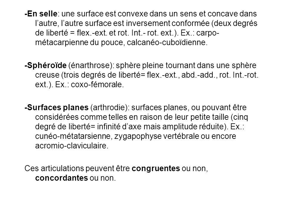 -En selle: une surface est convexe dans un sens et concave dans lautre, lautre surface est inversement conformée (deux degrés de liberté = flex.-ext.