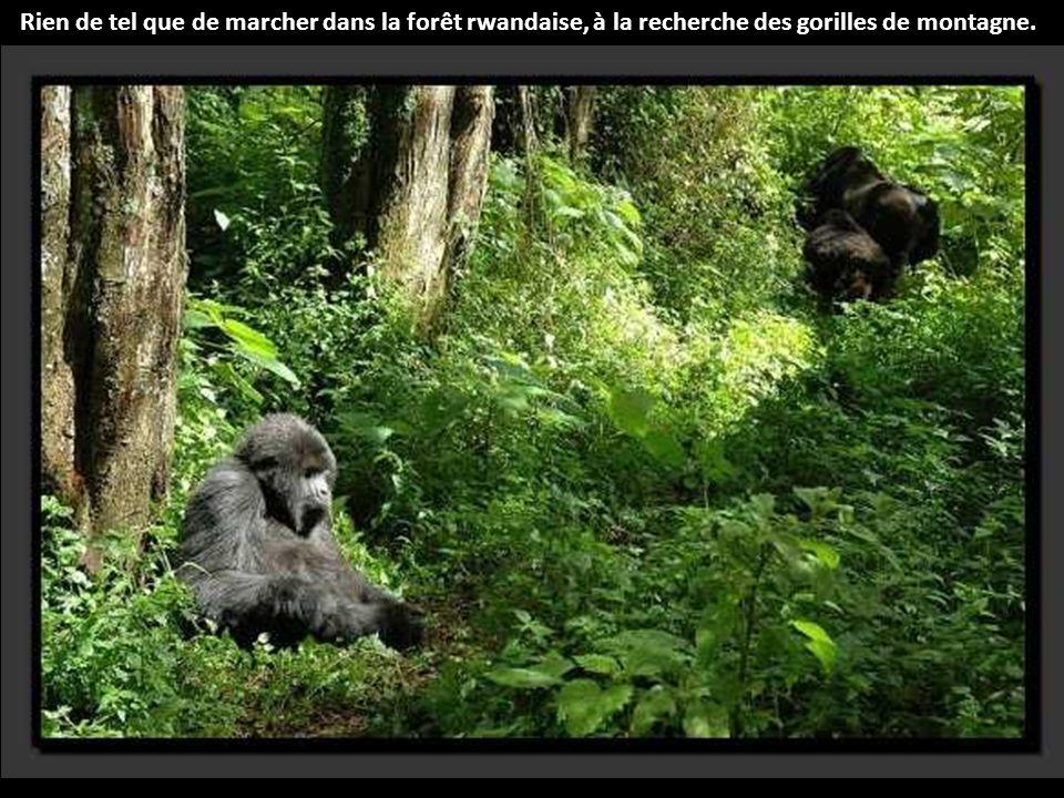 La Rain Forest est une forêt primaire dense et sombre située dans le nord-est de l Australie, au-dessus de la ville de Cairns