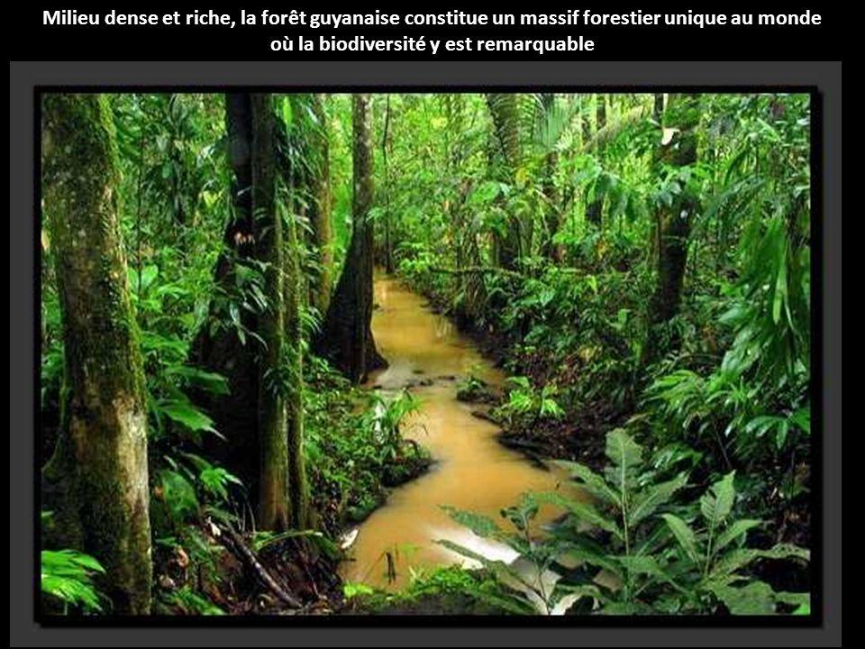 Palenque est une cité maya, située dans l état du Chiapas au Mexique, au bord du fleuve Usumacinta, en plein cœur de la forêt tropicale mexicaine