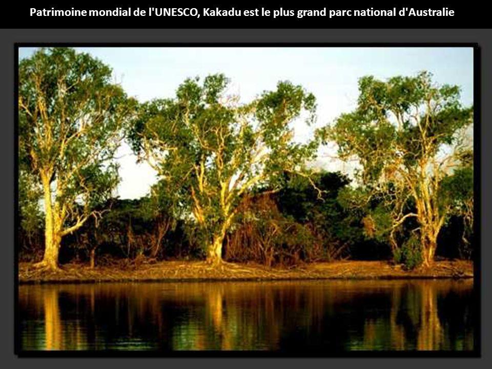 Milieu dense et riche, la forêt guyanaise constitue un massif forestier unique au monde où la biodiversité y est remarquable