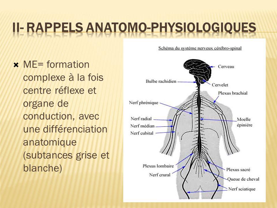 ME= formation complexe à la fois centre réflexe et organe de conduction, avec une différenciation anatomique (subtances grise et blanche)