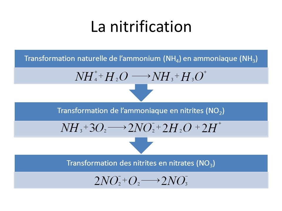Anoxies - Dénitrification Bactéries Besoin en oxygène Bactéries Besoin en oxygène Anoxie = Milieu sans O 2 Bactéries obligées de prélever loxygène dautres molécules Anoxie = Milieu sans O 2 Bactéries obligées de prélever loxygène dautres molécules Nitrates (NO 3 ) / Nitrites (NO 2 ) Perte atome Oxygène Transformation Nitrates (NO 3 ) / Nitrites (NO 2 ) Perte atome Oxygène Transformation NO