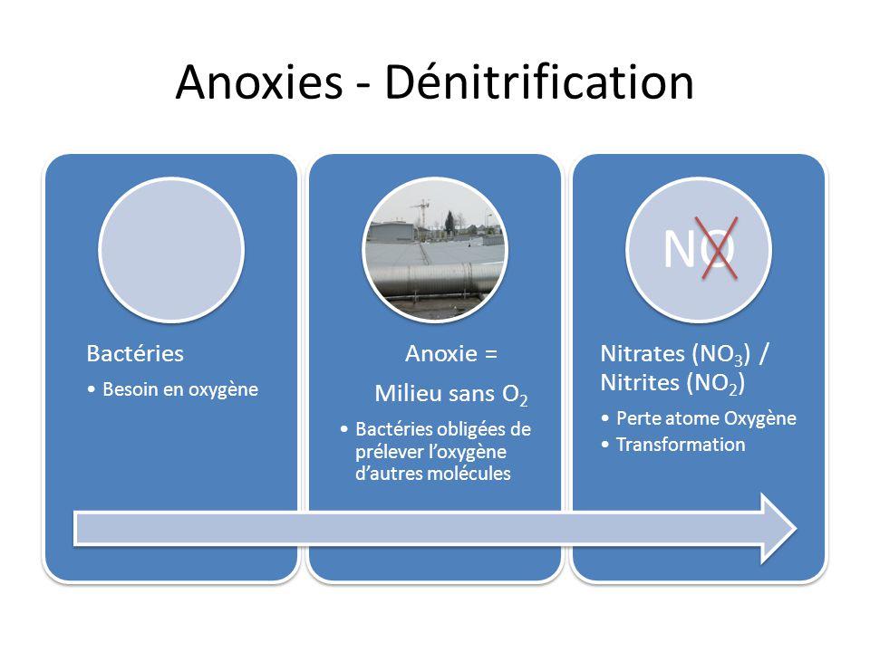 Anoxies - Dénitrification Bactéries Besoin en oxygène Bactéries Besoin en oxygène Anoxie = Milieu sans O 2 Bactéries obligées de prélever loxygène dau