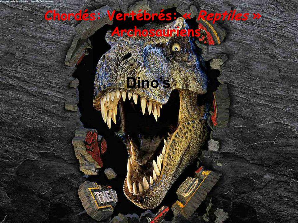 Chordés: Vertébrés: « Reptiles » Archosauriens Oiseaux (Ratites - Carinates)
