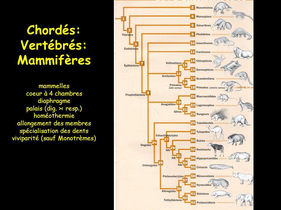 Vertébrés: Mammifères 1. Monotrèmes Ornithorynque Echidné