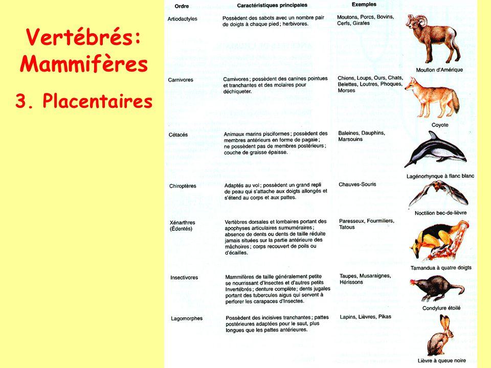 Vertébrés: Mammifères 3. Placentaires