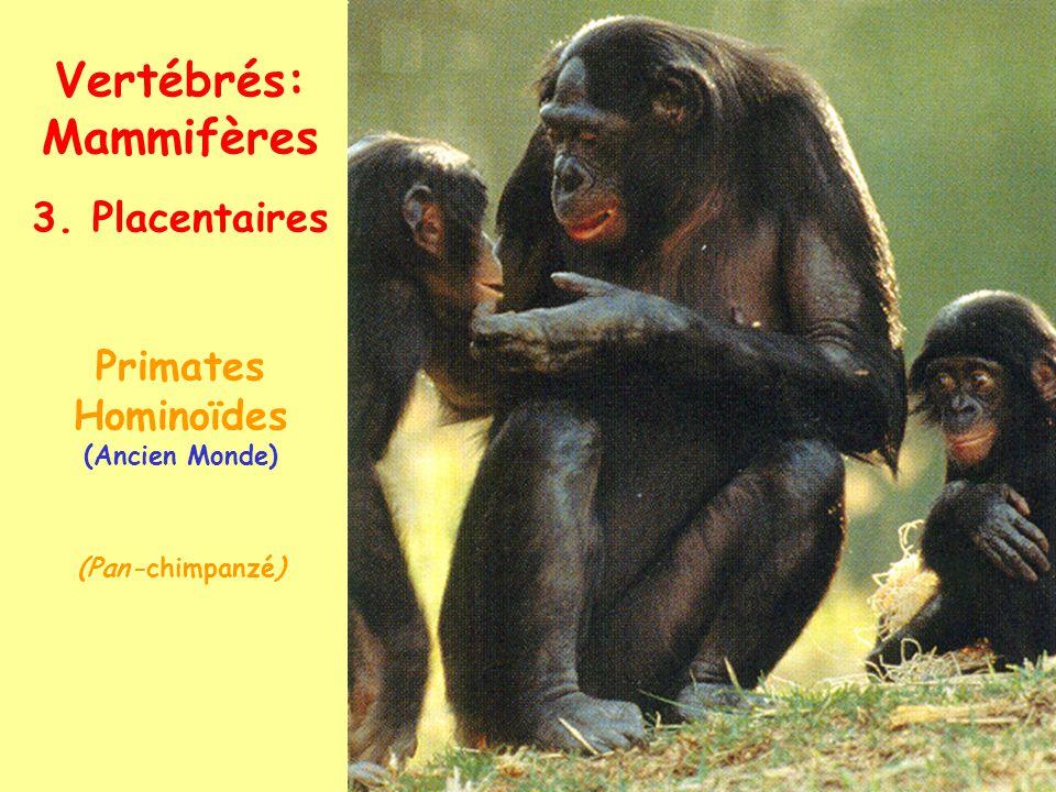 Vertébrés: Mammifères 3. Placentaires Primates Hominoïdes (Homo sapiens)