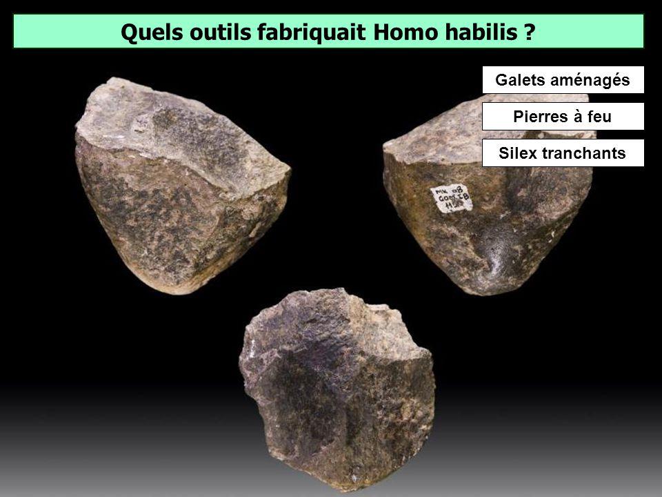 Lequel de ces hominidés est le plus ancien ? Homo habilis (littéralement « homme habile ») est une espèce du genre Homo qui vivait en Afrique il y a a