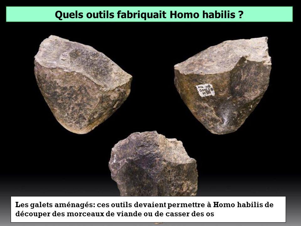 Quels outils fabriquait Homo habilis ? Galets aménagés Pierres à feu Silex tranchants