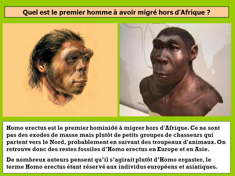 Quel est le premier homme à avoir migré hors dAfrique ? (Il y a environ 2 millions dannées) Homo habilis Homo erectus Homo sapiens