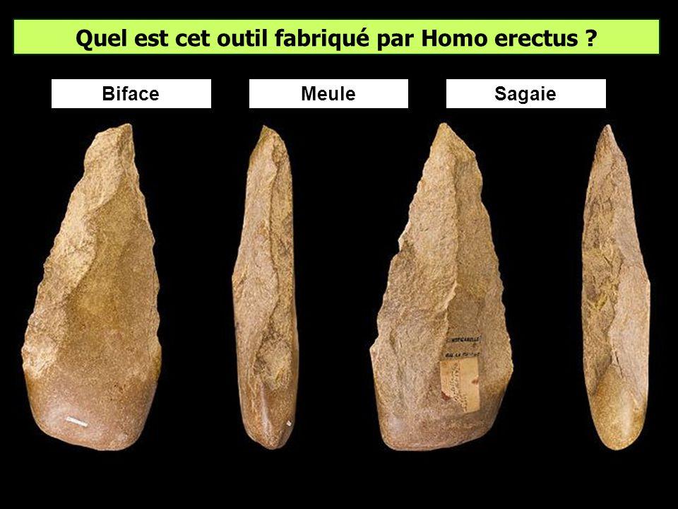 Le plus vieil hominidé européen connu est âgé de ? Des fossiles dHomo georgicus datés d1,8 Ma ont été trouvés à Dmanissi en Géorgie. Il pourrait donc