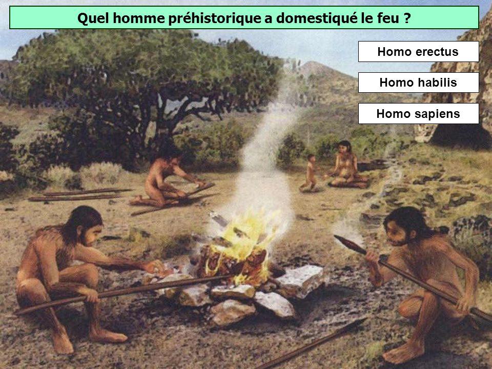 Quel est cet outil fabriqué par Homo erectus ? Les matières premières utilisées pour les bifaces sont très diversifiées : silex, quartzite, quartz, gr