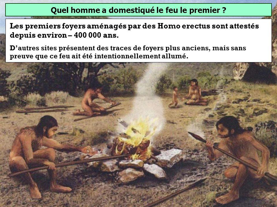 Quel homme préhistorique a domestiqué le feu ? Homo erectus Homo habilis Homo sapiens