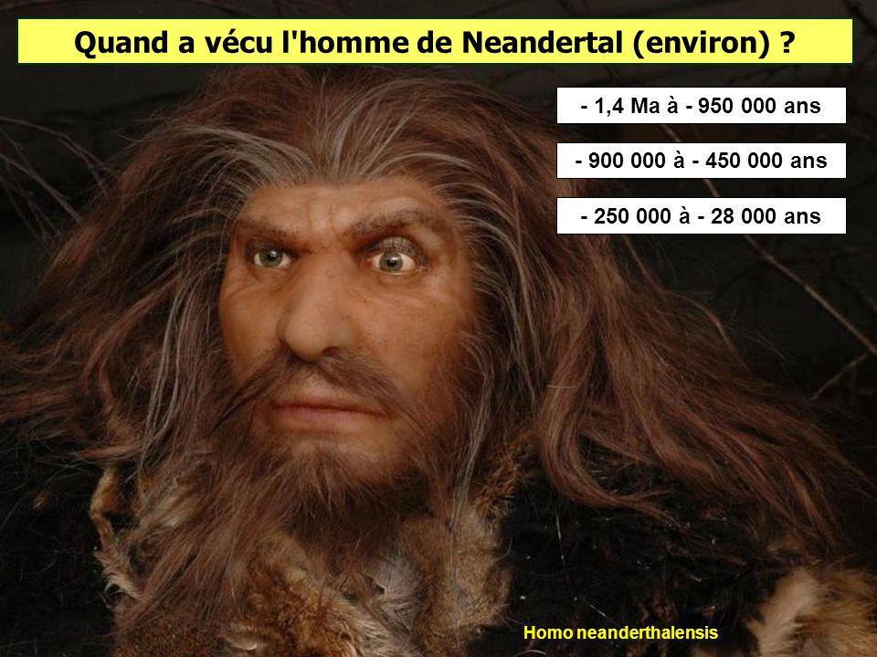 L'homme de Tautavel est considéré comme un pré-néanderthalien. Il se nourrissait de rhinocéros, chevaux, mouflons, tahrs, bœufs musqués, bisons, cerfs