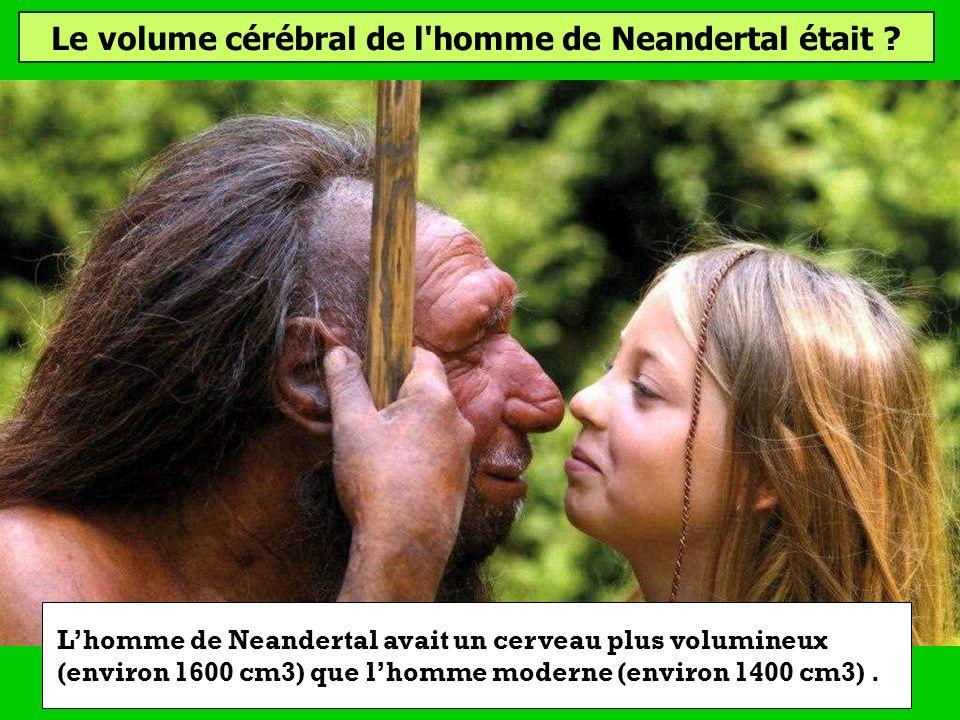 Le volume cérébral de l'homme de Neandertal était ? Supérieur au notreInférieur au notreÉquivalent au notre